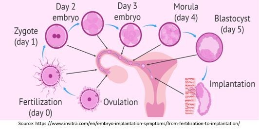 Types of a Blastocyst