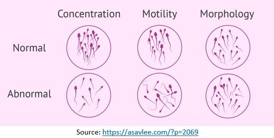 Images for Motility