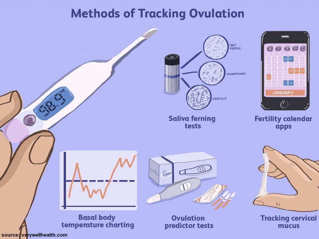 ovulation Image