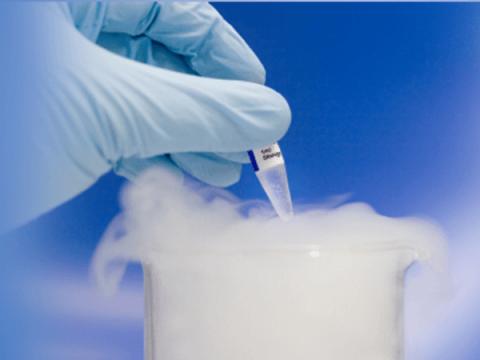 oocyte-cryopreservation